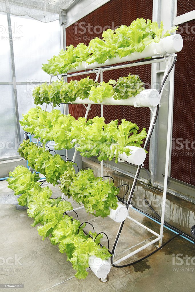 Soilless culture stock photo