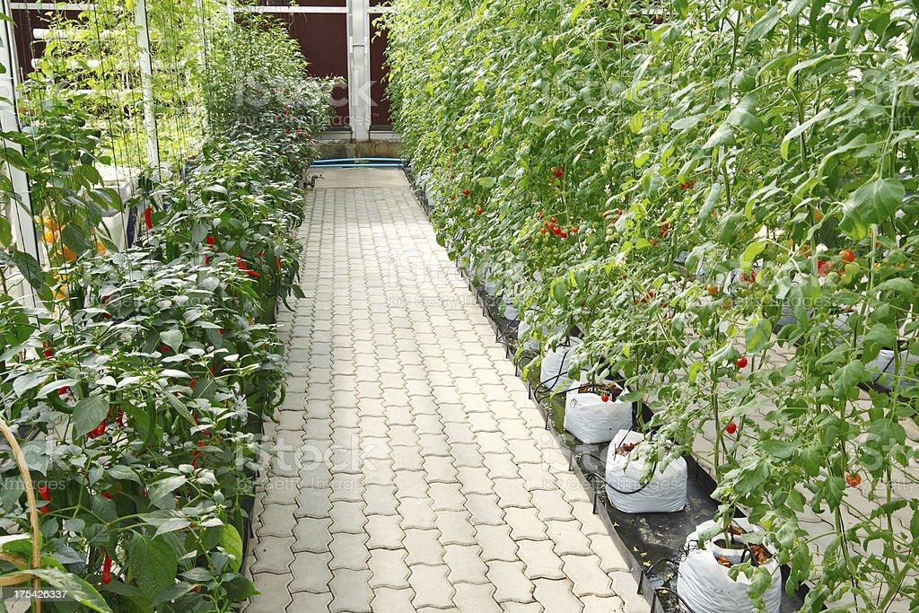 Soilless garden stock photo