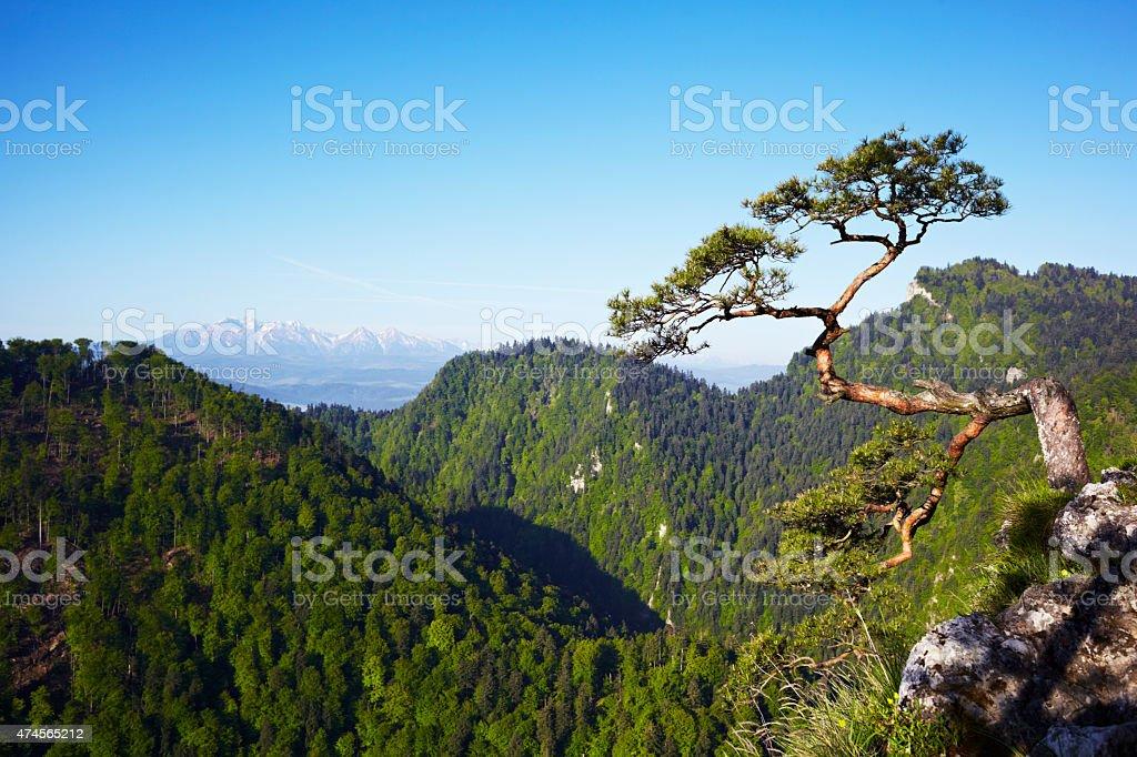 Sokolica Peak stock photo