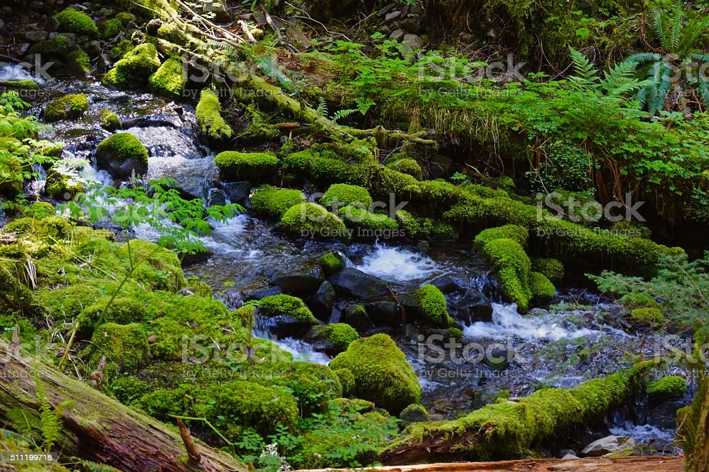 Sol Duc Forest Moss stock photo