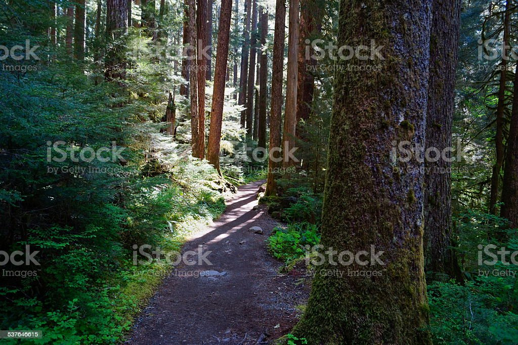 Sol Duc Forest Trail stock photo