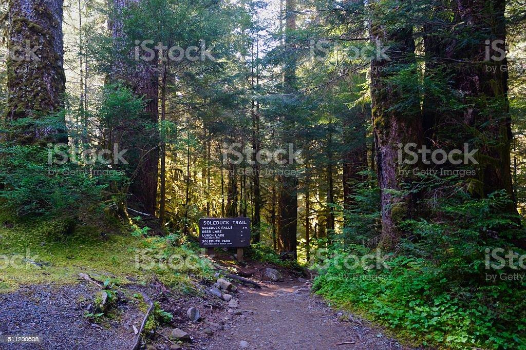 Sol Duc Rainforest stock photo