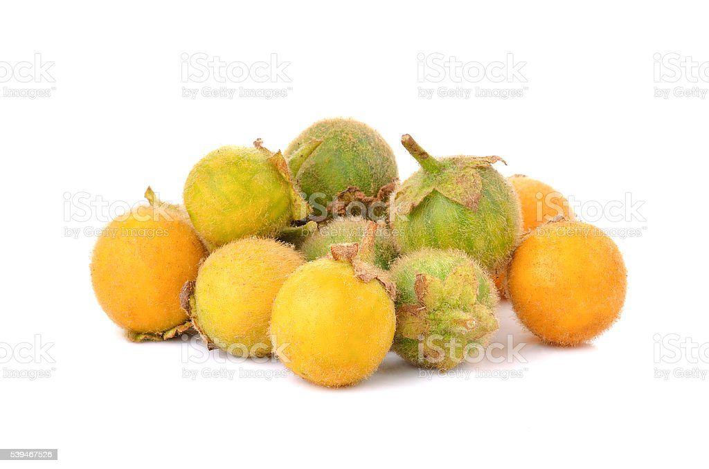 Solanum ferox on white background stock photo
