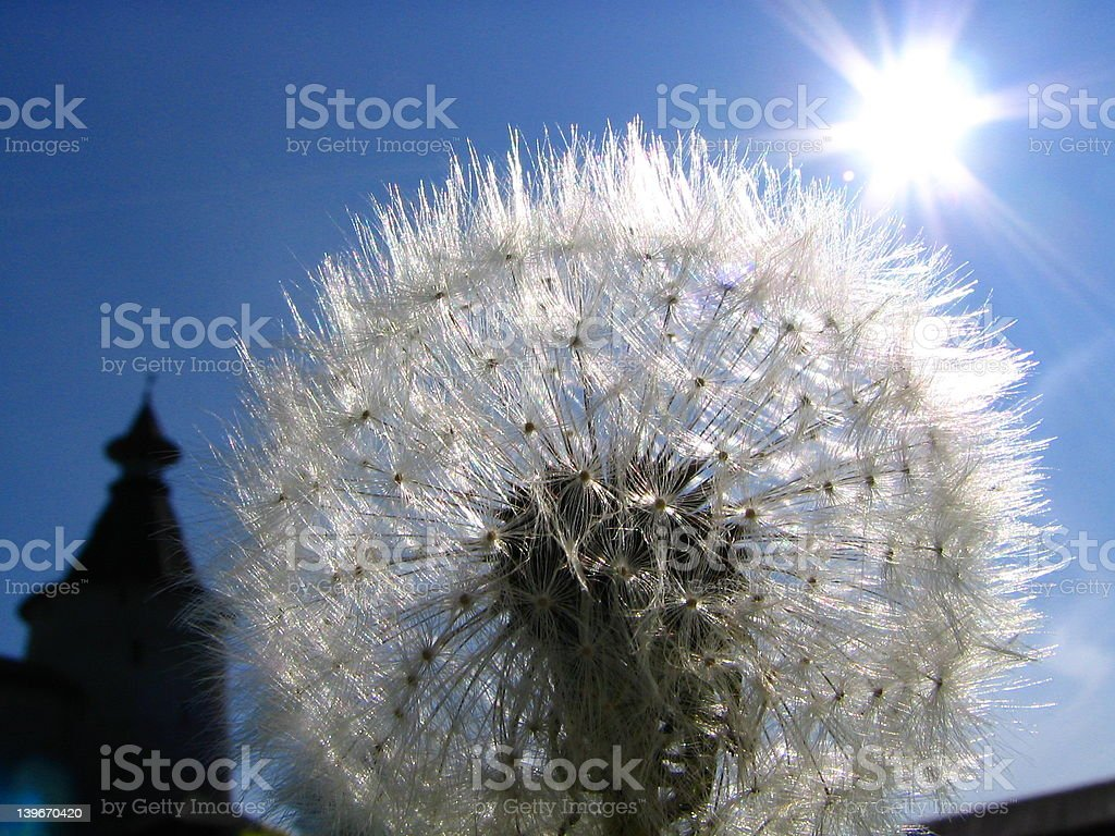 Solar dandelion royalty-free stock photo