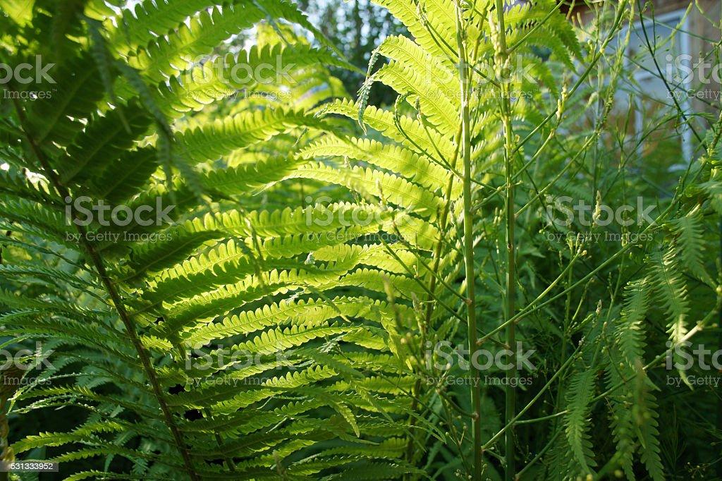 Solar fern stock photo