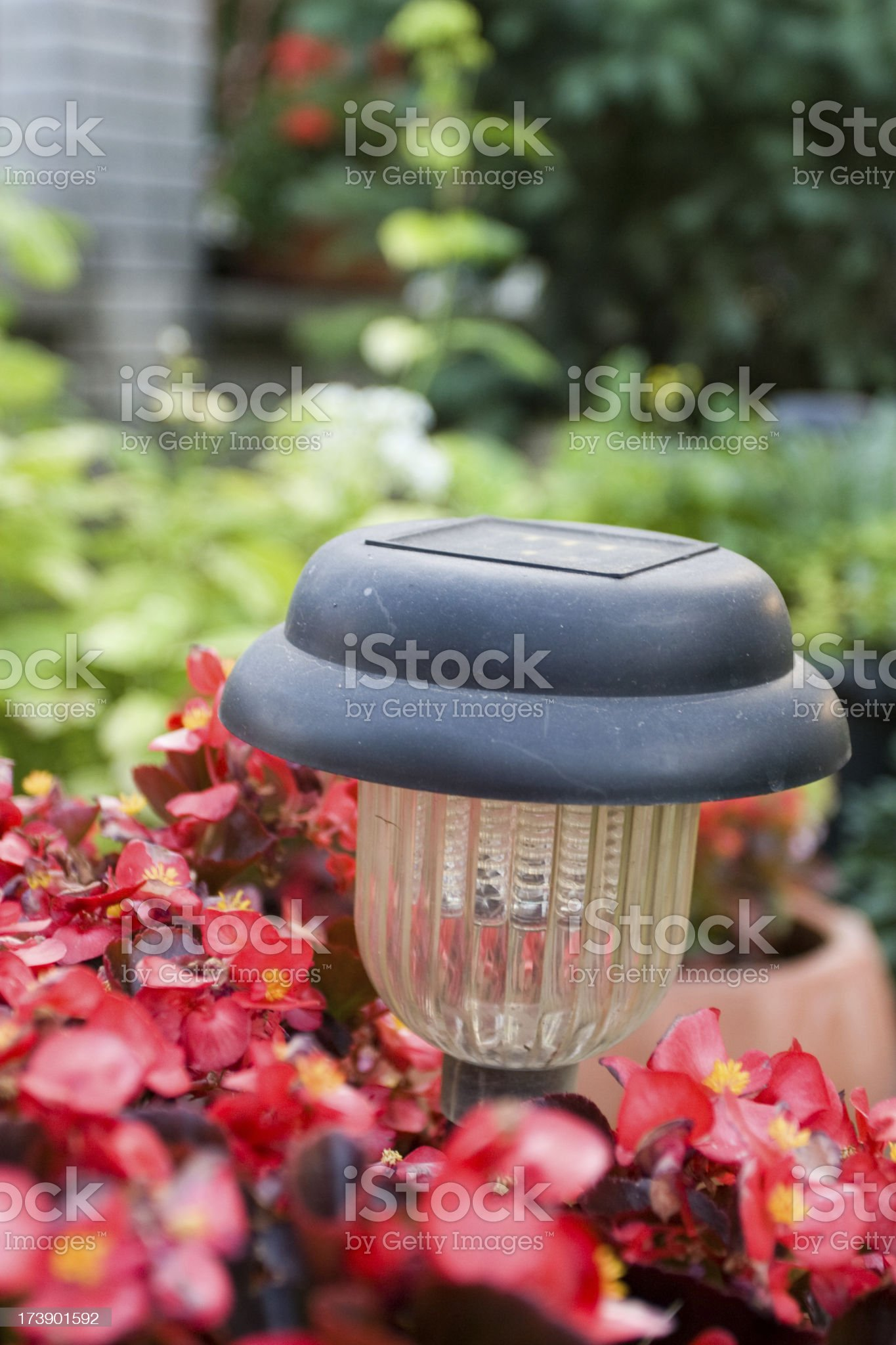 solar lamp in red flowers royalty-free stock photo