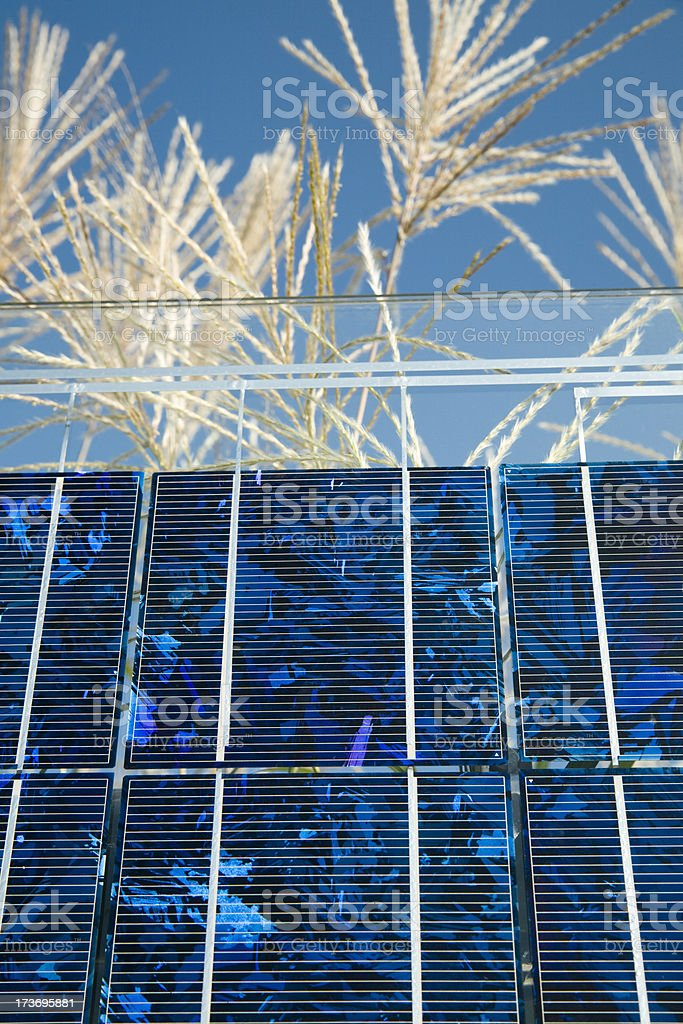 Solar panel and Reed royalty-free stock photo