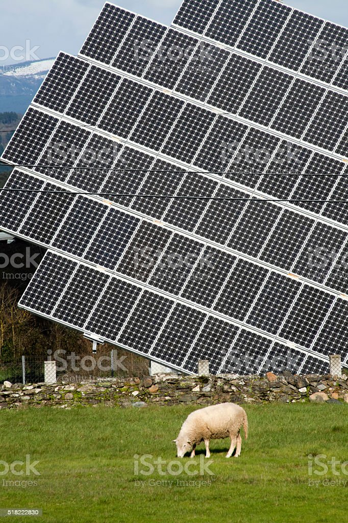 Solar panel on green meadow, sheep grazing, environmental conservation. stock photo