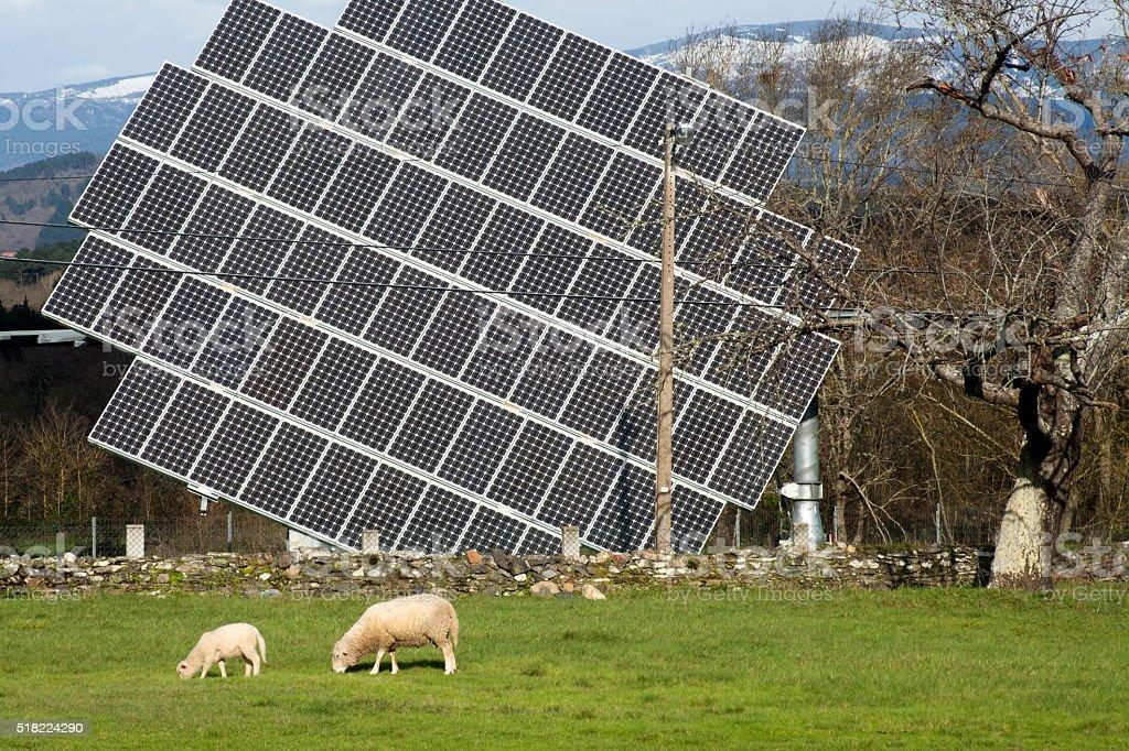 Solar panel , sheep grazing, environmental conservation. stock photo