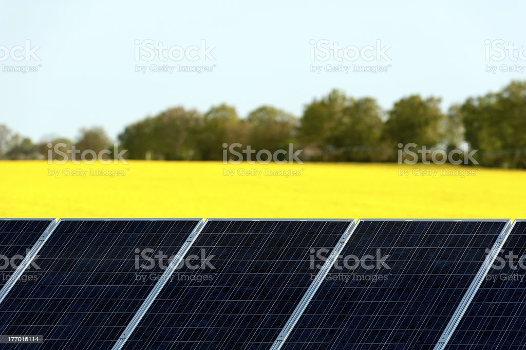Solar panels in a canola field stock photo