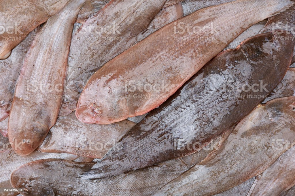 Sole fish background stock photo