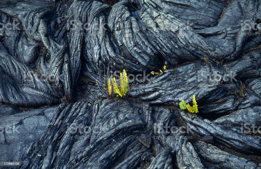 Solidified lava with plants growing out of it royalty-free stock photo