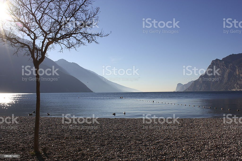 Solitair Tree on a beach stock photo