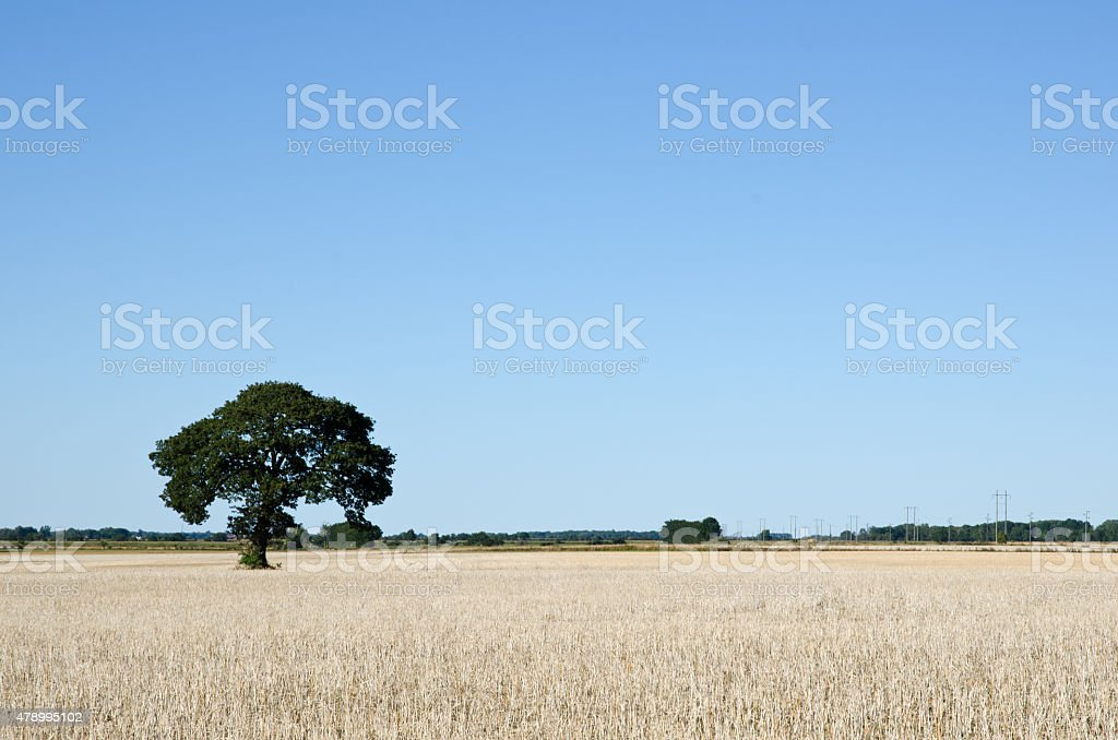 Solitaire tree in a field stock photo