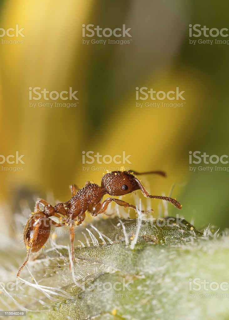 Solitary Ant royalty-free stock photo