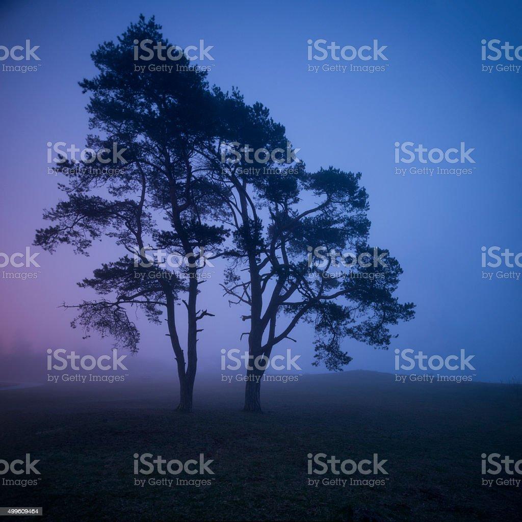 Solitary fir-tree in spooky magic colorful fog mist, shadows (XXXLarge) stock photo