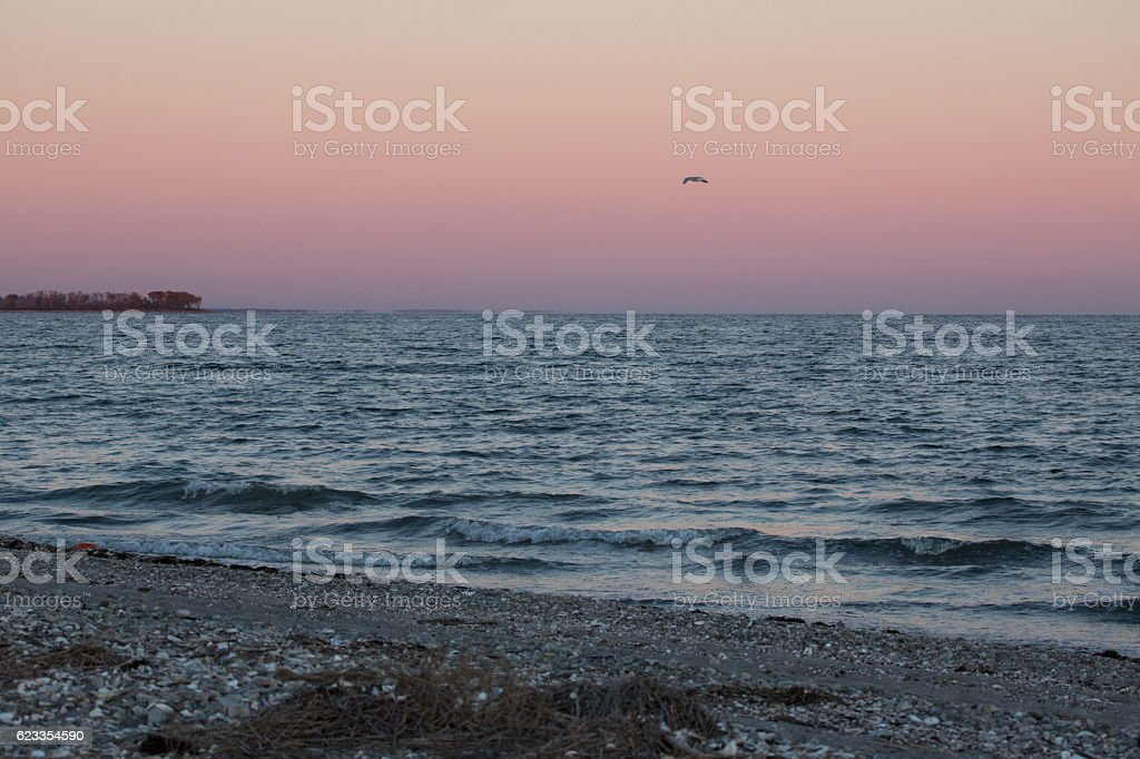 Solitary gull after sunset at Milford Point, Connecticut. stock photo