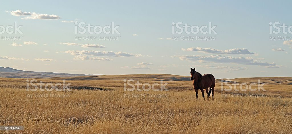 Solitary Horse in Cypress Hills royalty-free stock photo