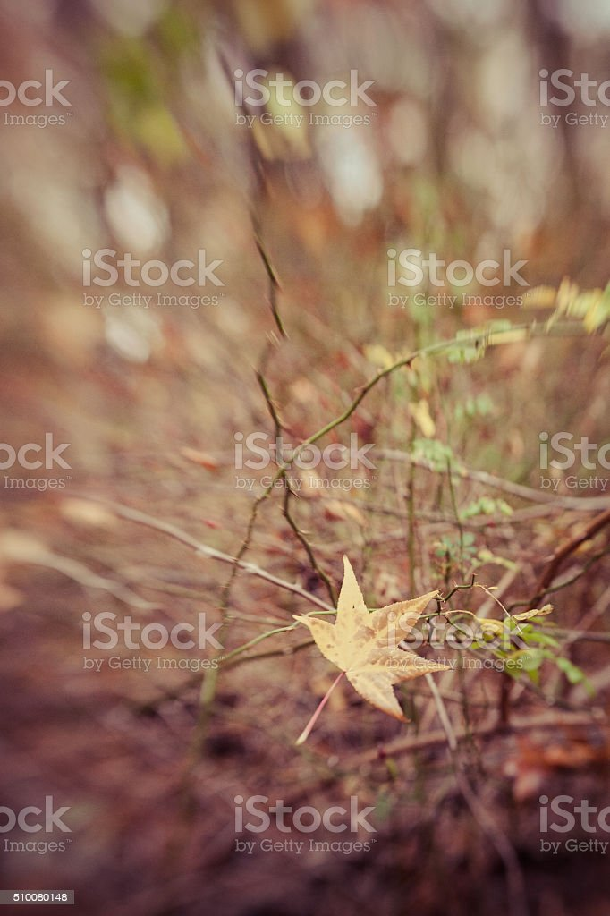 Solitary Leaf stock photo