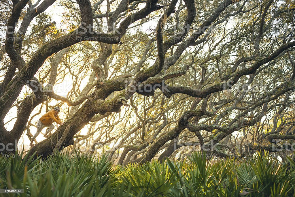 Solitary Male climbs on large tree at sunset royalty-free stock photo