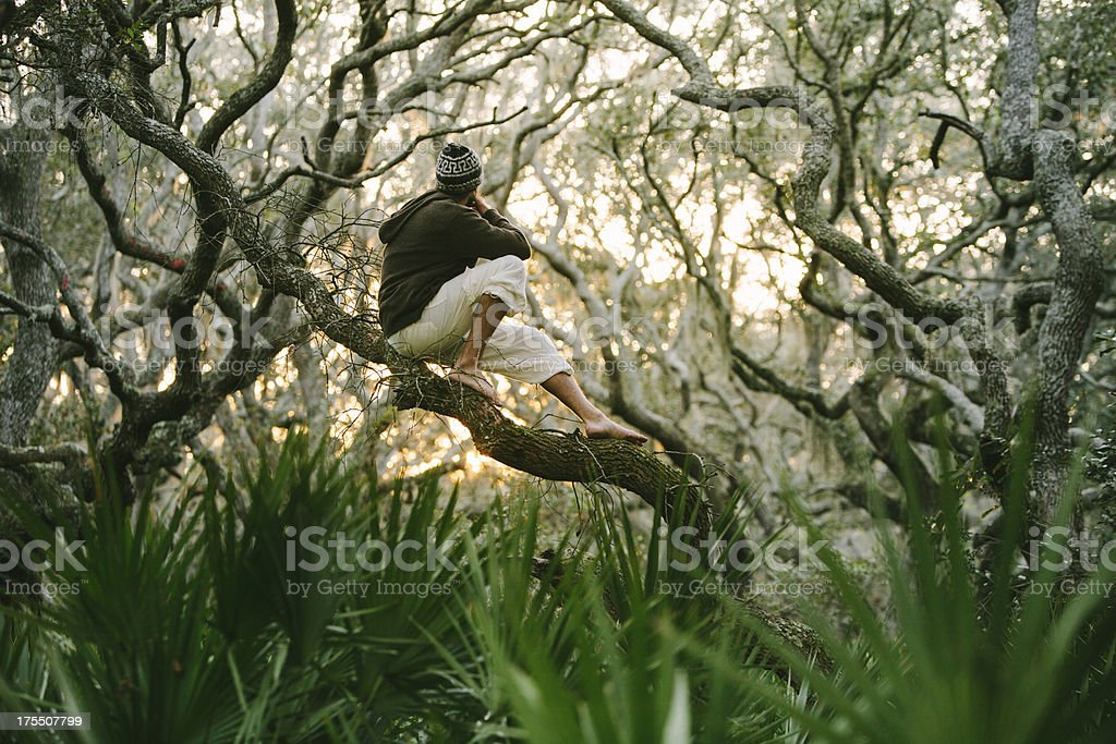 Solitary male sitting in large oak tree at sunset stock photo