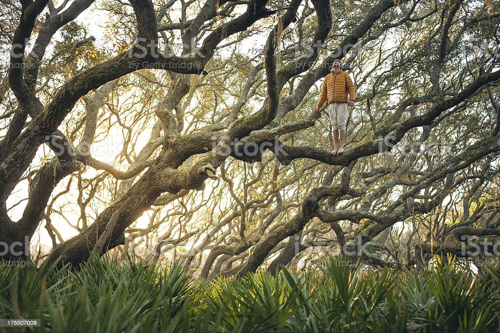 Solitary man stands on tree branch at sunset stock photo