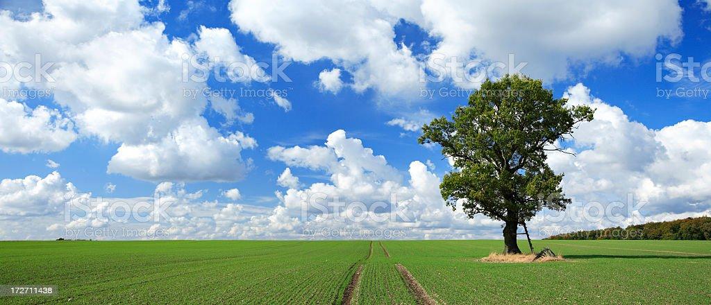 Solitary Oak Tree on Green Field royalty-free stock photo