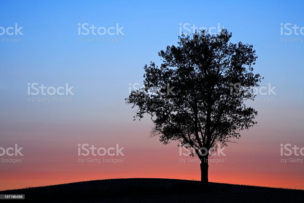 Solitary Tree after Sunset royalty-free stock photo