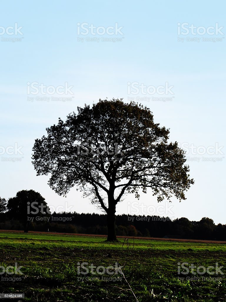 Solitary tree against the sky stock photo