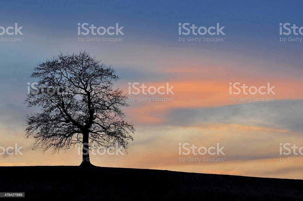 Solitary Tree at Dusk stock photo