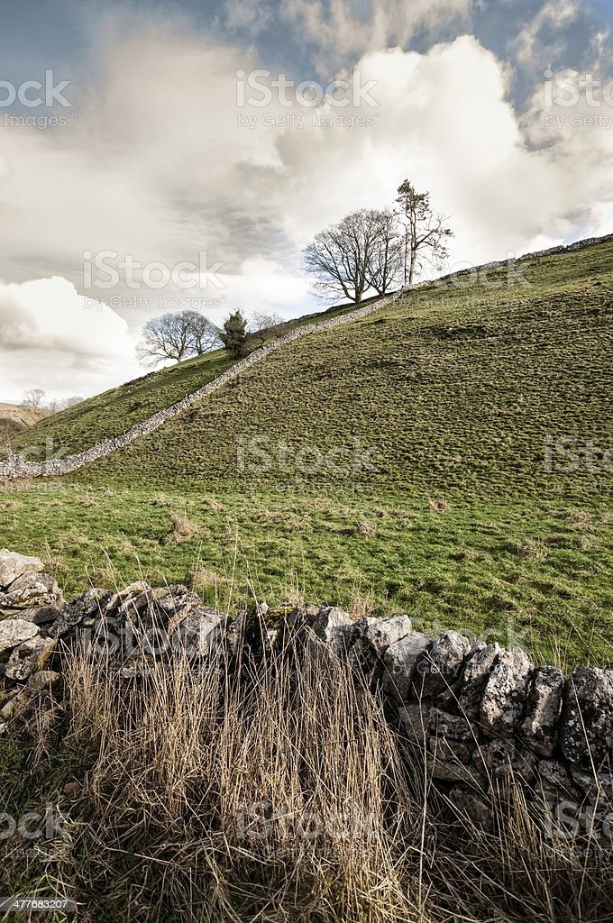 Solitary tree in Dovedale, Peak District National Park, UK stock photo