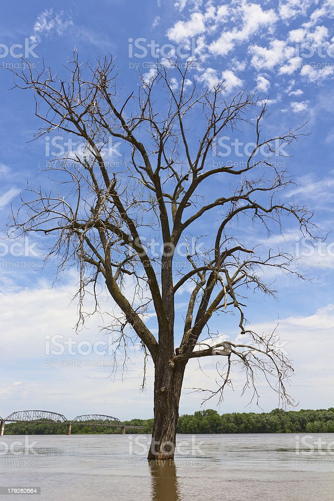 Solitary Tree in Flooded Mississippi River royalty-free stock photo