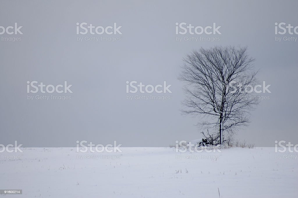 Solitary Tree - in snow covered field royalty-free stock photo