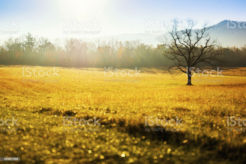 Solitary Tree in the Field, Great Smoky Mountains, Cades Cove royalty-free stock photo