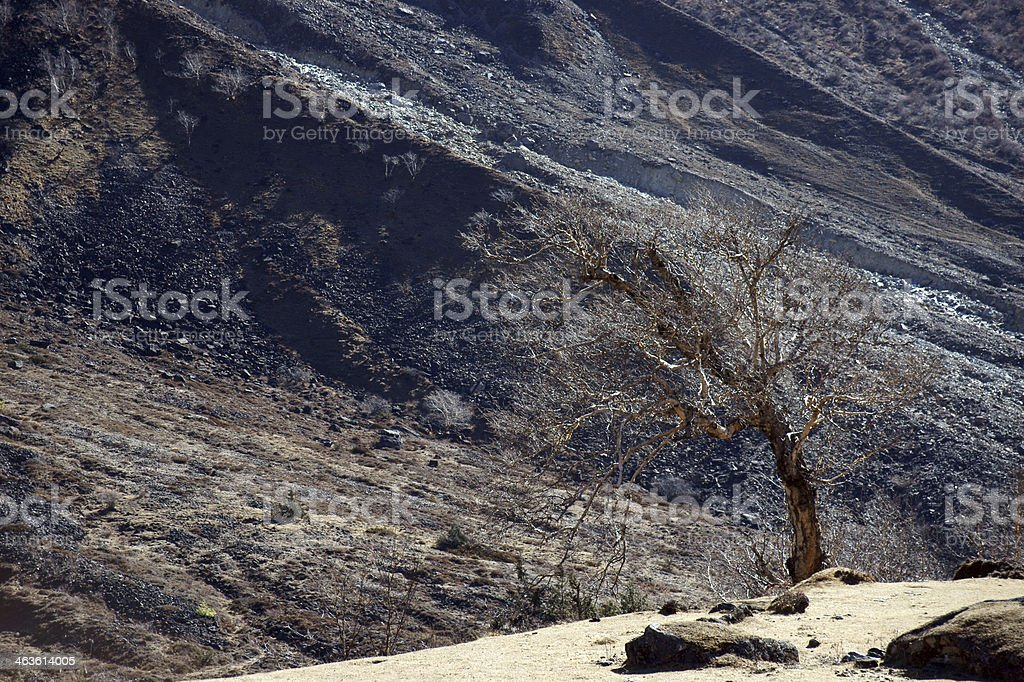 Solitary tree in the high mountains royalty-free stock photo