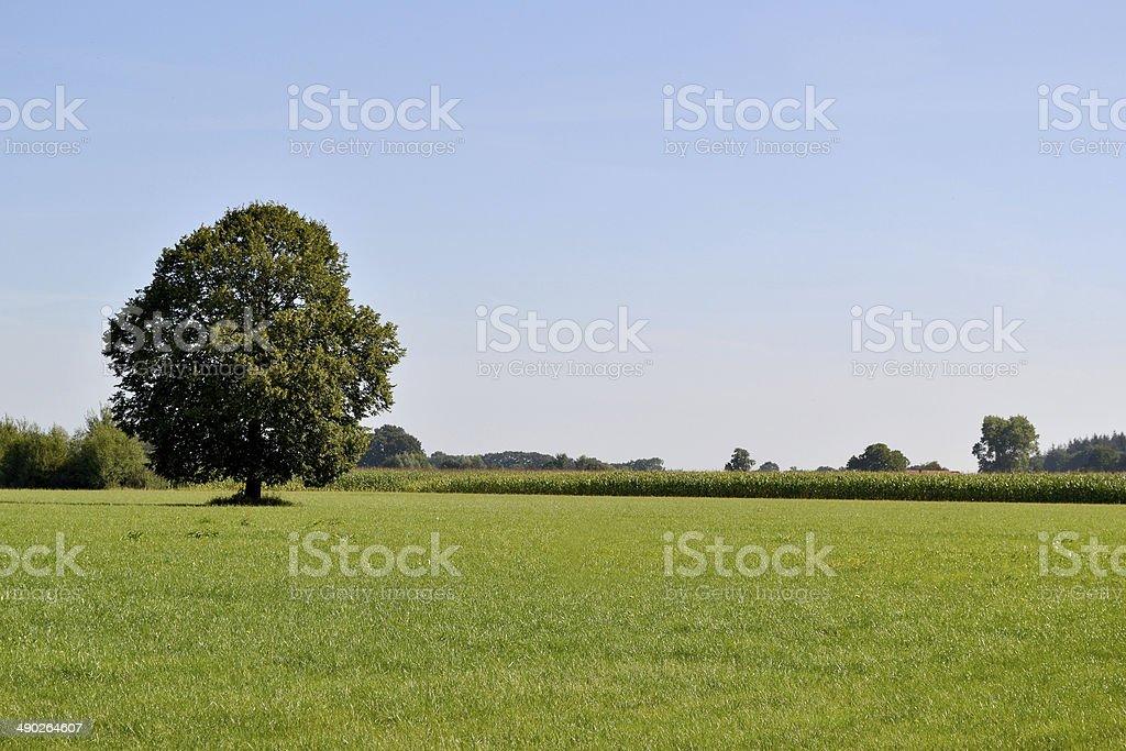 木を兼ねています。 ロイヤリティフリーストックフォト