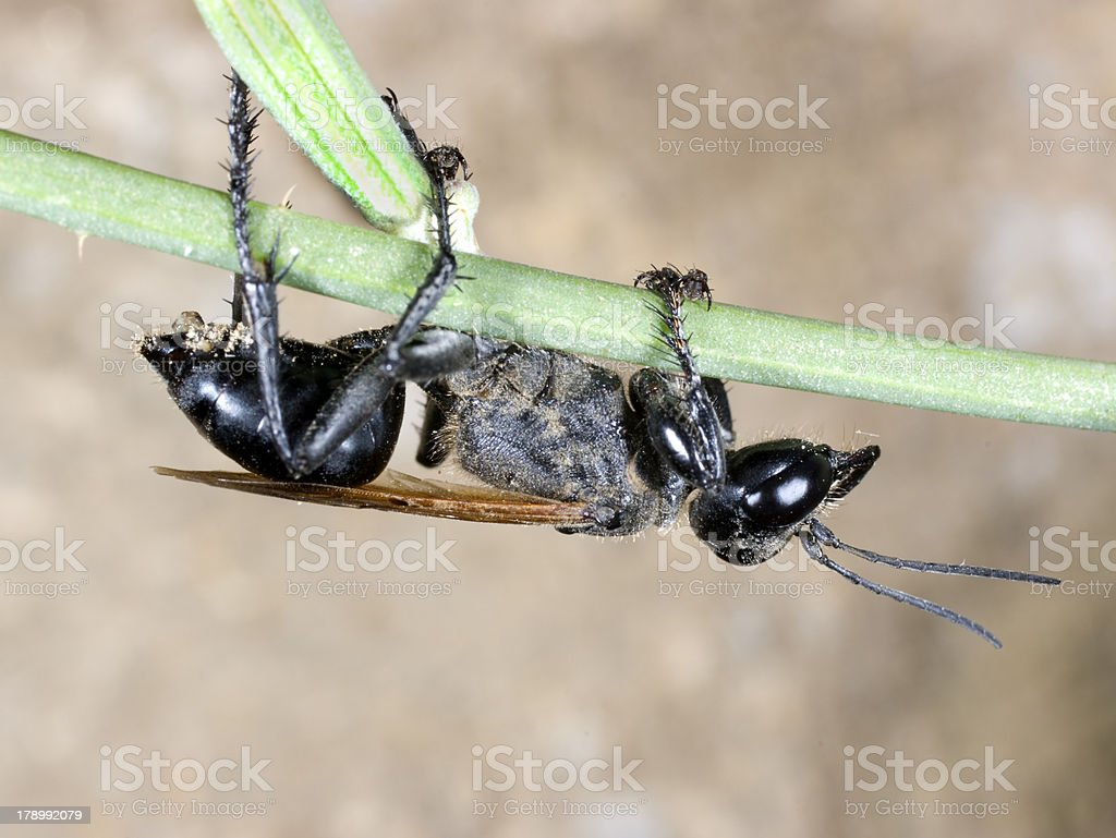 Solitary Wasps stock photo