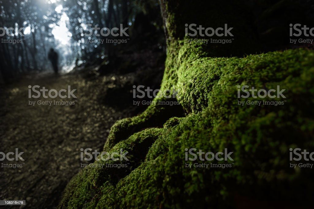 Solitude among the woods stock photo