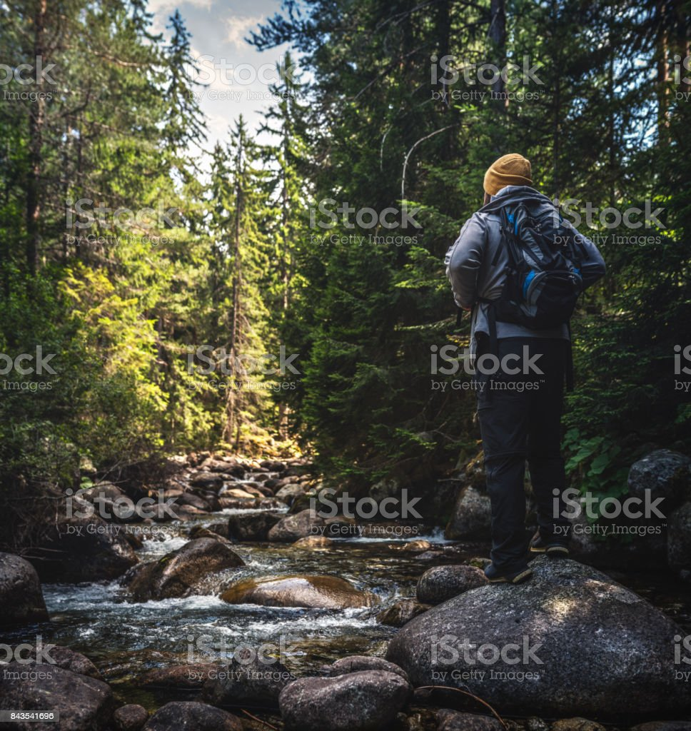 Solitude in forest stock photo