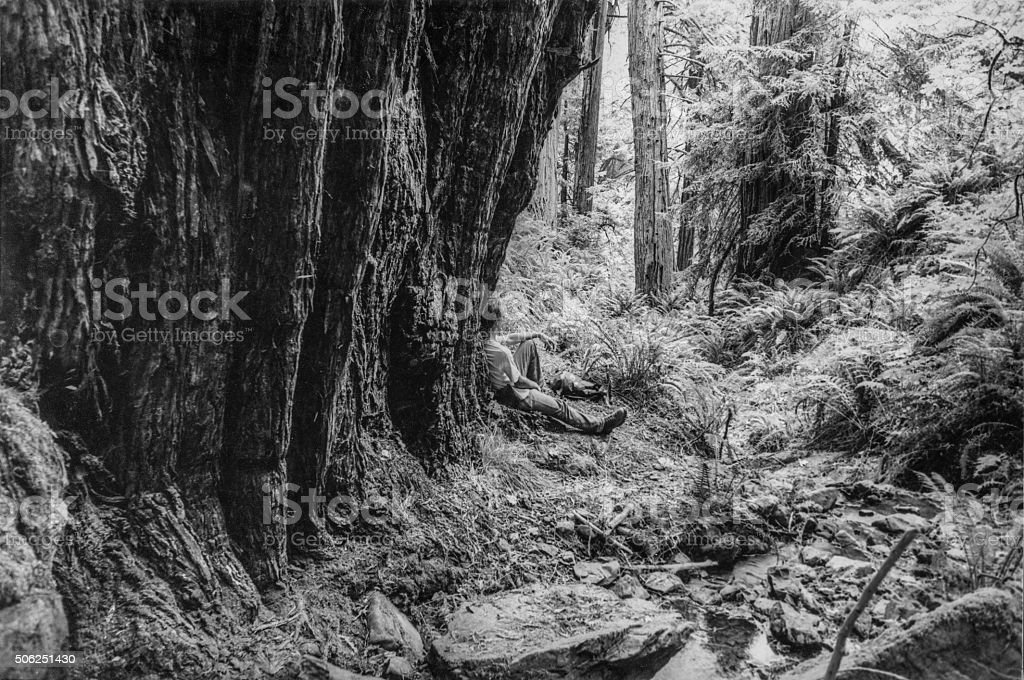 Solitude in the redwoods stock photo