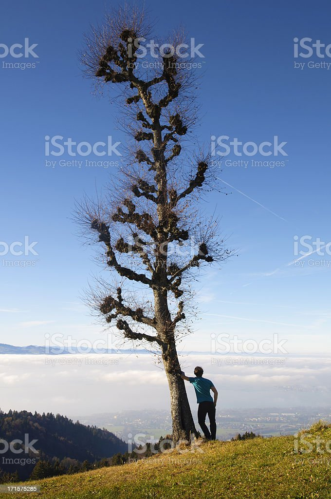 solitude man leaning on a tree stock photo