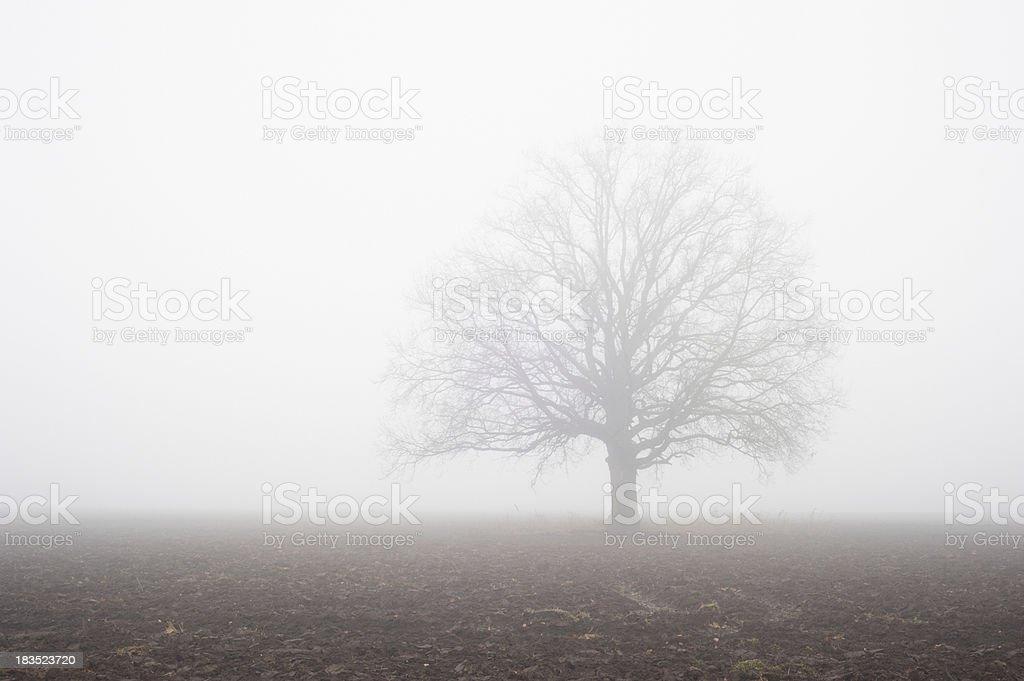 solitude royalty-free stock photo