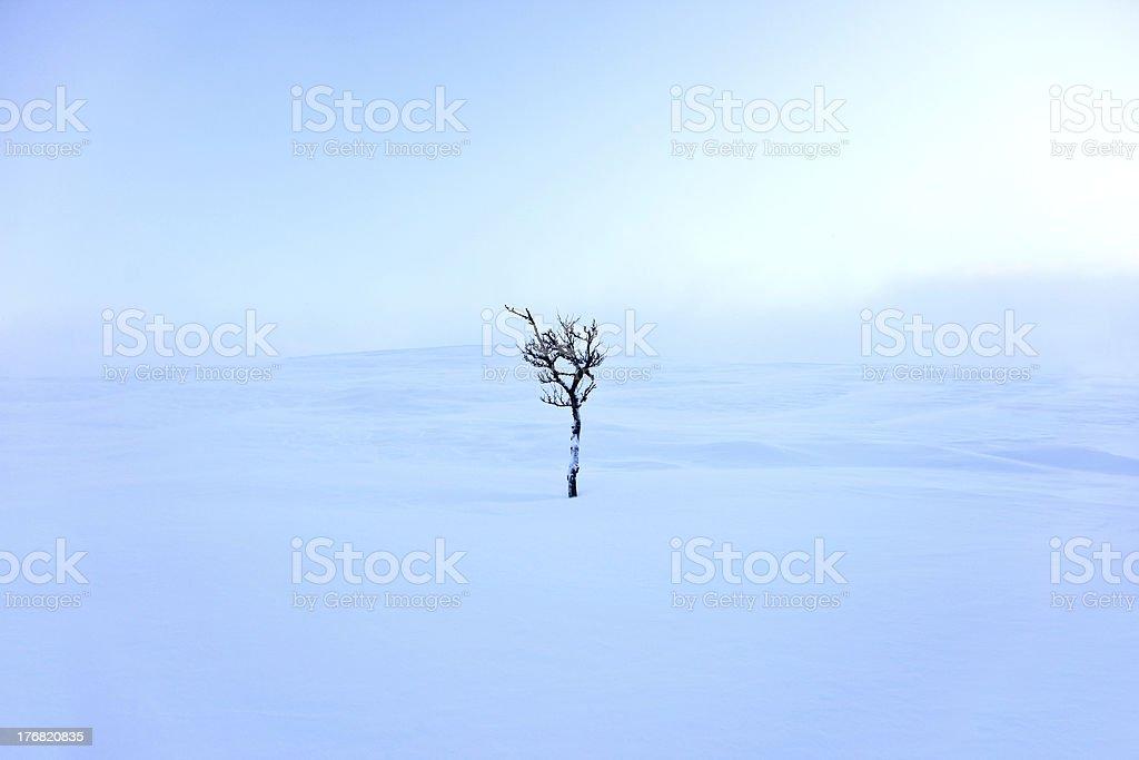 Solitude tree royalty-free stock photo