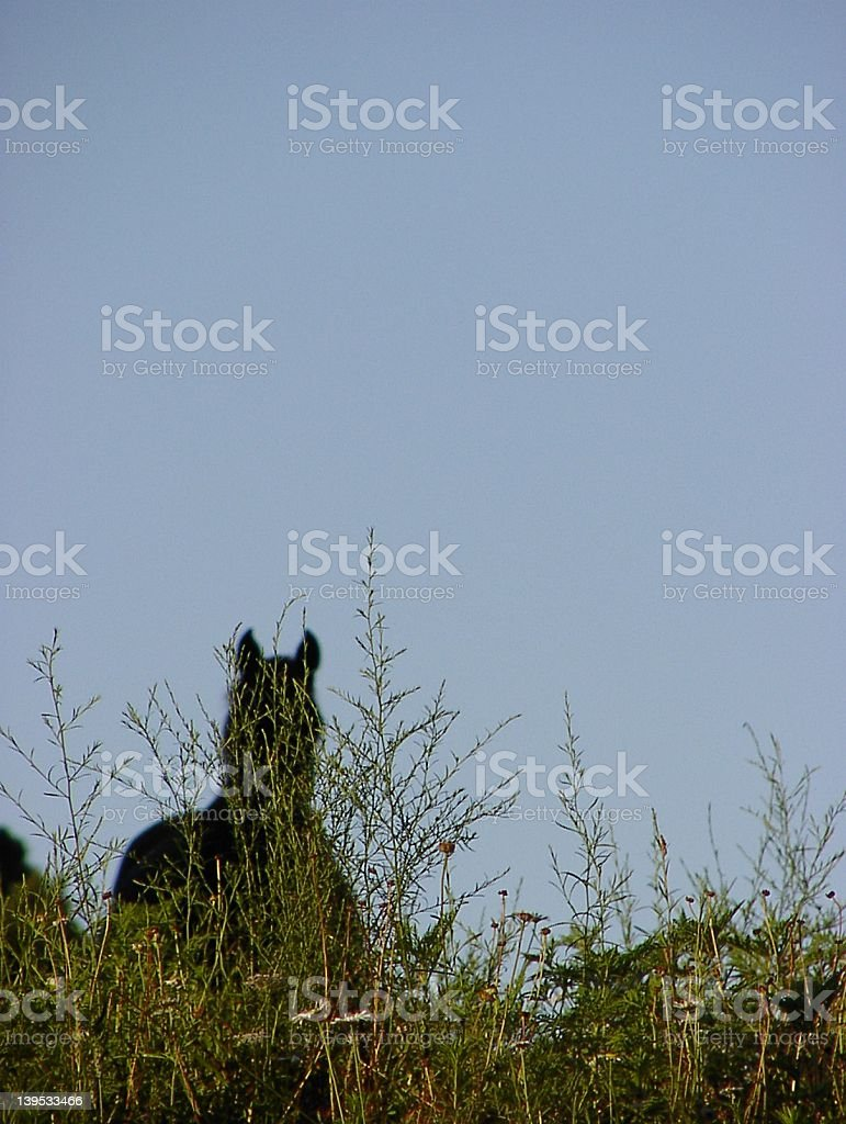 Solo of horse stock photo