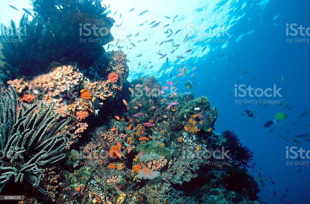 Récif de Solomon photo libre de droits