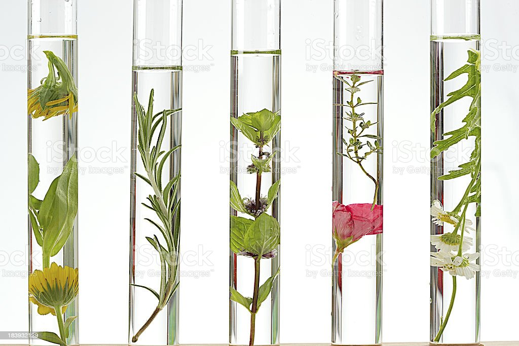 solution of medicinal plants and flowers in  test tubes stock photo