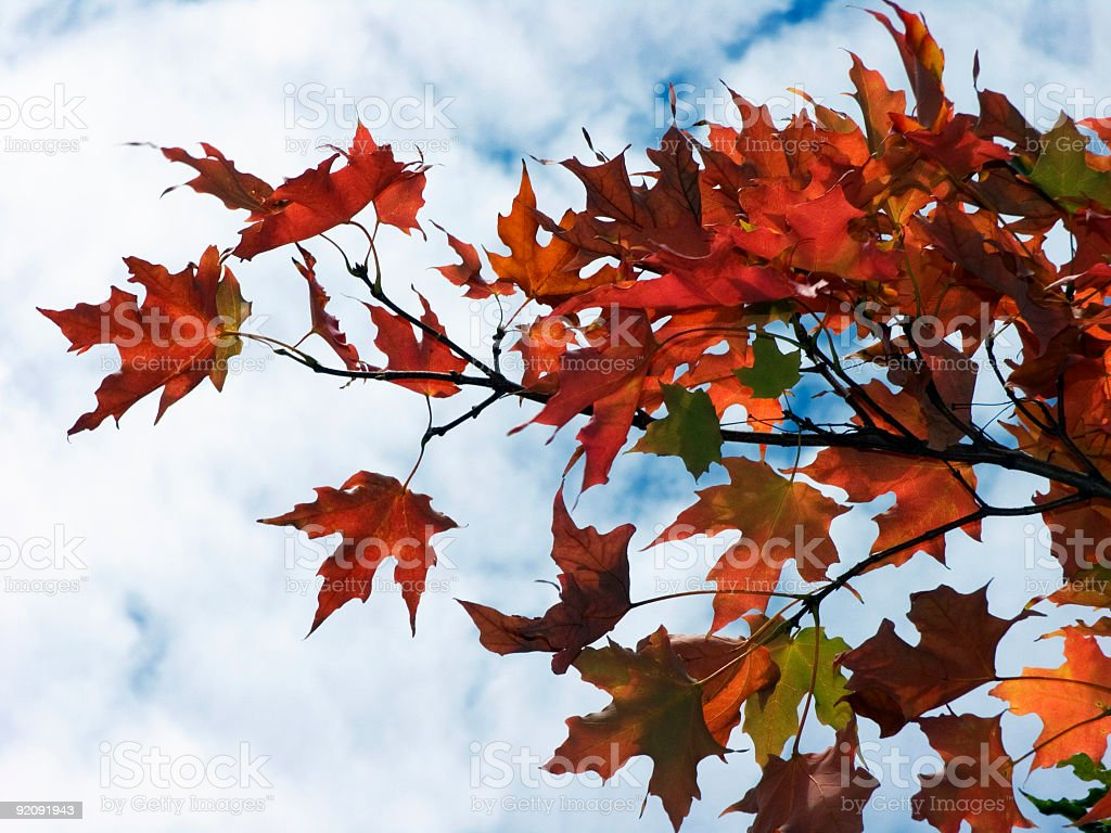 some autumn leaves amongst us royalty-free stock photo