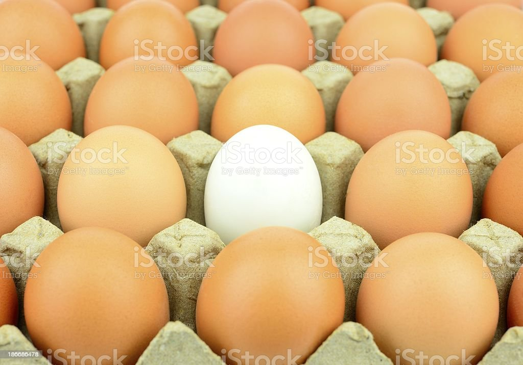 Some brown eggs and one white egg royalty-free stock photo