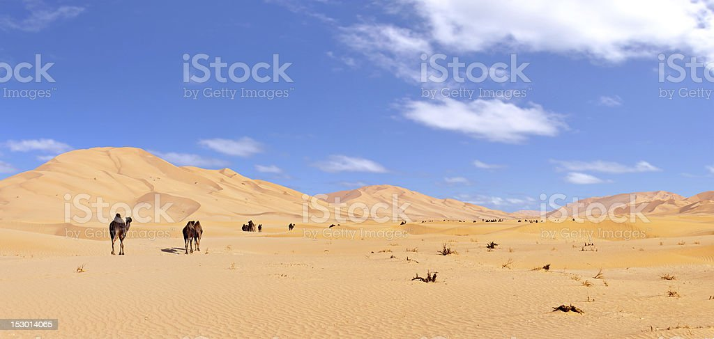 Some camels in the 'Rub Al Khali'-Desert stock photo