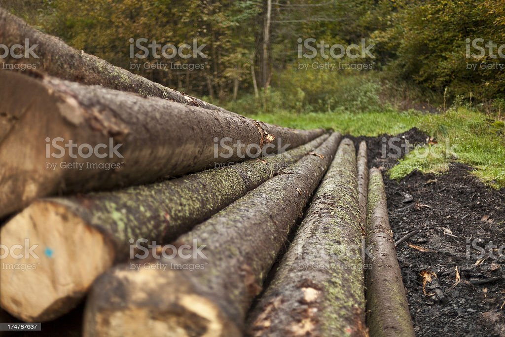 Some cutted tree trunks royalty-free stock photo